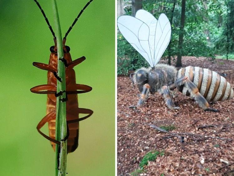 'Big Insects' uit Twente in de tuin van paleis Soestdijk