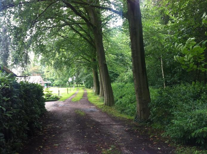 Bij landgooed Seldensate gaat niet één beukenboom om. Niet als het ligt aan Cor en Lena van den Akker uit Middelode.
