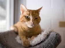 Rotterdammer (32) die wordt verdacht van kattenmarteling, ontkent: 'Toeval dat ik daar was'