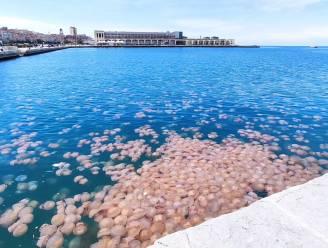 Duizenden roze kwallen overspoelen Italiaanse haven