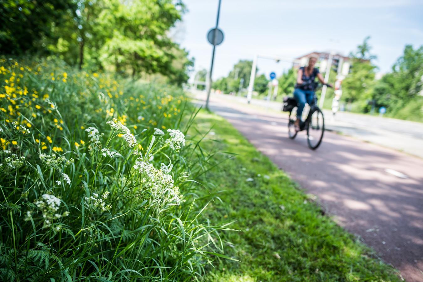 Ondervraagden zien in Wierden en Enter liever ruige bermen met veel bloemen, waar  niet geregeld gemaaid wordt.