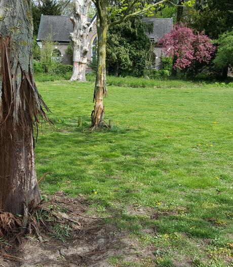 Vernielde bomen blijken trainingsobject voor vechthonden