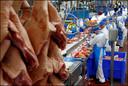 Reportage varkensslachterij VION Boxtel De derde fase ; De gedode varkens worden gereed gemaakt voor produktie  Foto ; Pim Ras