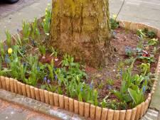 Gratis planten voor Midden-Delflanders moeten 'boomtuintjes' in bloei zetten