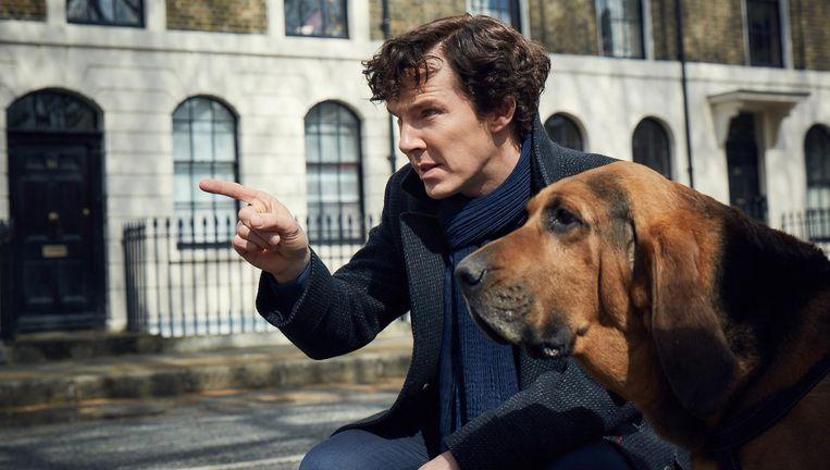 In het nieuwe seizoen krijgt Sherlock (Benedict Cumberbatch hulp van een speurhond. Beeld