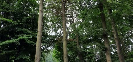 Gelderland laat 20 dode beuken kappen aan Stapeldijk in Ruurlo, rest bomen wordt uit voorzorg teruggesnoeid