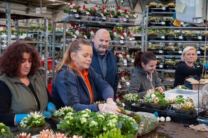 Bij PT Creations in Wijk en Aalburg worden kerststukjes in elkaar gezet. In het midden directeur Janthijs de Fijter.