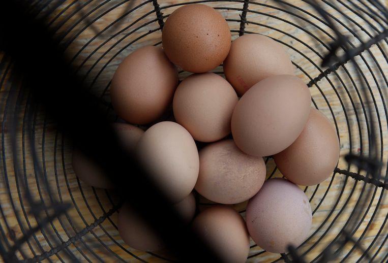 Waarom communiceerde het voedselagentschap pas na zes weken dat er hoge concentraties fipronil was aangetroffen in eieren bij een bedrijf in Sint-Niklaas? Beeld Photo News