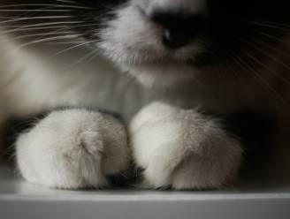 Politie brengt overleden kat en baasje weer samen