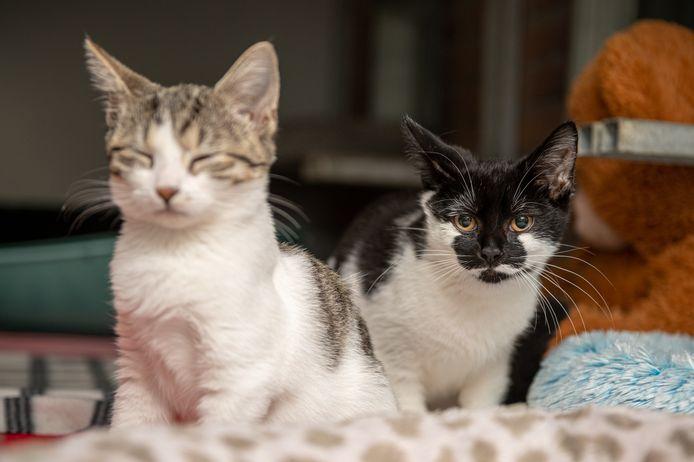 Een deel van de kittens heeft al nieuwe baasjes gevonden.