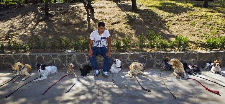 Een Hondentrainer in Mexico-Stad. Beeld AFP