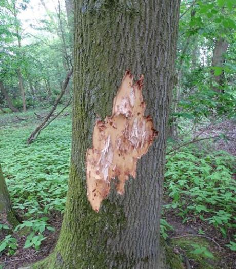 Vandalisme in Leijpark Tilburg: drie bomen zwaar beschadigd