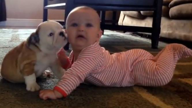 Schattige baby moet wennen aan nieuwe pup in huis