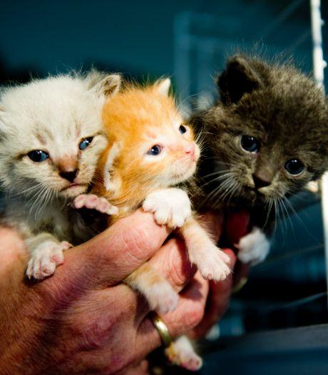 Politie neemt zeven verwaarloosde katten in beslag in 'flink vervuilde woning'