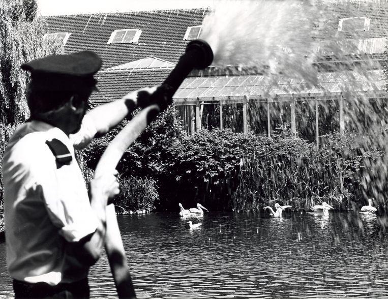 Amsterdamse brandweer vult de vijvers van dierentuin Artis bij vanwege de aanhoudende droogte. Door het te lage waterpeil zou botulisme kunnen ontstaan. 7 juli 1976. Beeld Nationaal Archief/Collectie Spaarnestad/NFP