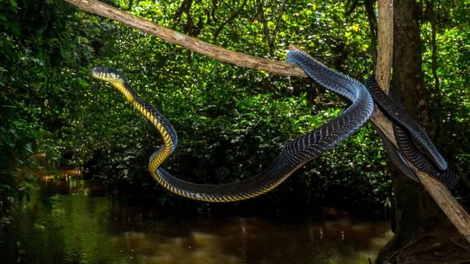 Belgische bioloog beschrijft zes nieuwe slangensoorten