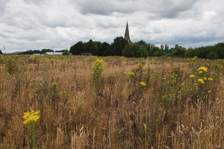 De kerktoren in de verte is nu nog zichtbaar. Beeld Carlotta Cardana
