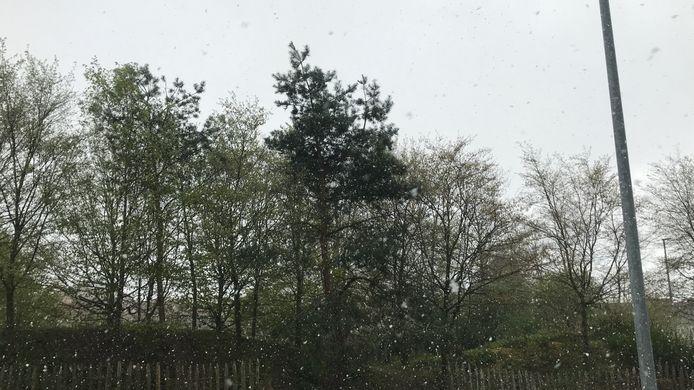 Een sneeuwbui in Aalst.