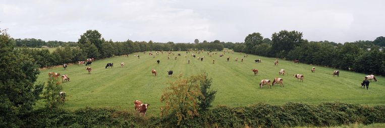 Weiland met koeien ter hoogte van Rottevalle in Friesland. Beeld Hans van der Meer