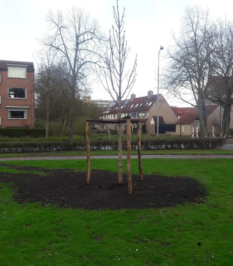 Anne Frankboom in Veenendaal is al geplant, officieel moment volgt in april