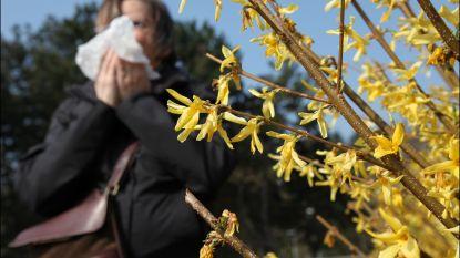 Nog nooit zoveel pollen in onze lucht als dit jaar