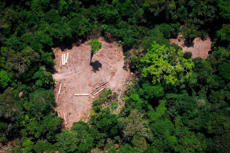 Illegale houtkap in de Amazone. Beeld AFP