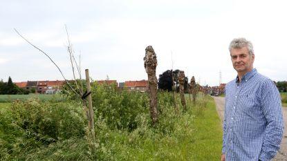 """Danny Puyneers: """"De bomen aan de Kasteelstraat zijn zo dood als een pier"""""""
