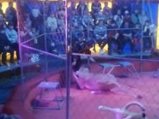 Une lionne attaque son dresseur pendant un spectacle de cirque