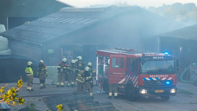 Brand in stal met tientallen kalveren in Oijen