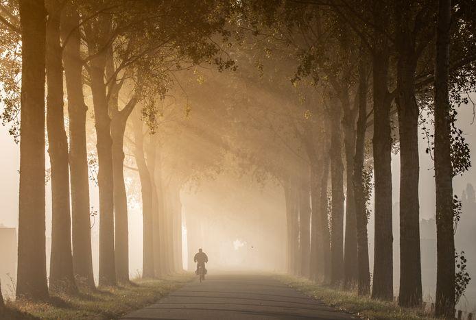 Zonnestralen door de bomen aan de Molendijk in 's-Gravendeel.