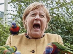 Angela Merkel mordue par un perroquet: cette photo fait le bonheur des internautes