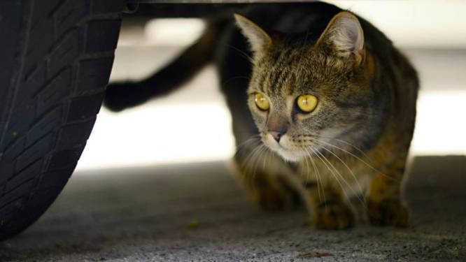 Doorrijden na aanrijden van een kat? Hier krijg je nu een boete van bijna 12.000 euro
