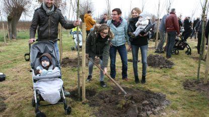 Laarne plant geboortebos verder aan op 10 maart