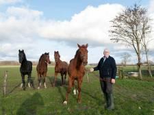 Jan Streppel (82) uit Wilp-Achterhoek verkozen tot beste paardenfokker van Nederland