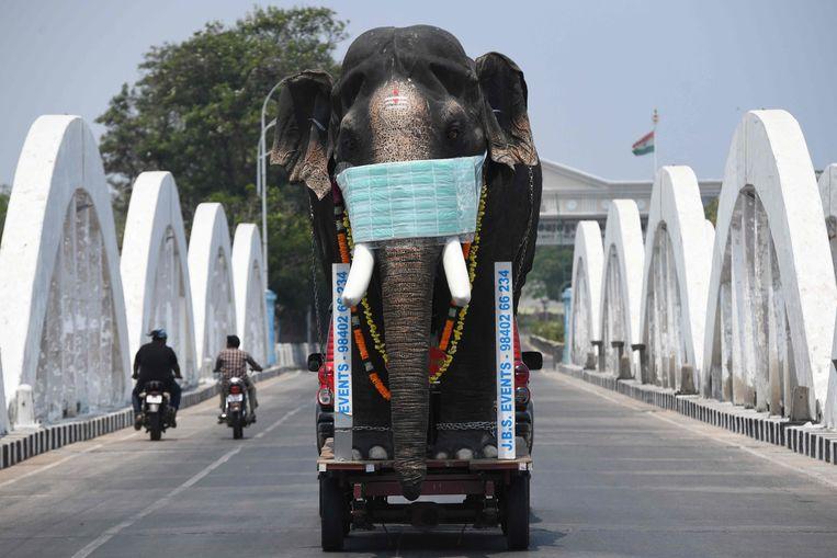 Een replica van een olifant met mondmasker moet bewoners van de Indiase stad Chennai bewust maken van de maatregelen tegen het virus.   Beeld AFP