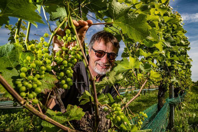 Luud Paulissen van Wijngaard Ludique in Deventer: ,,Ik denk dat we 5 tot 10 procent van de oogst kunnen afschrijven. Maar dat had veel meer kunnen zijn.''