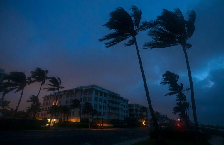 Palmbomen vechten tegen de wind door tropische storm Isaias aan Palm Beach, Florida, zondag. Beeld AP
