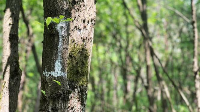 """Schepen van Leefmilieu Toon Vandeurzen (CD&V) geeft uitleg over natuurbeheer in Genk: """"Wij kappen nooit zonder reden bomen"""""""