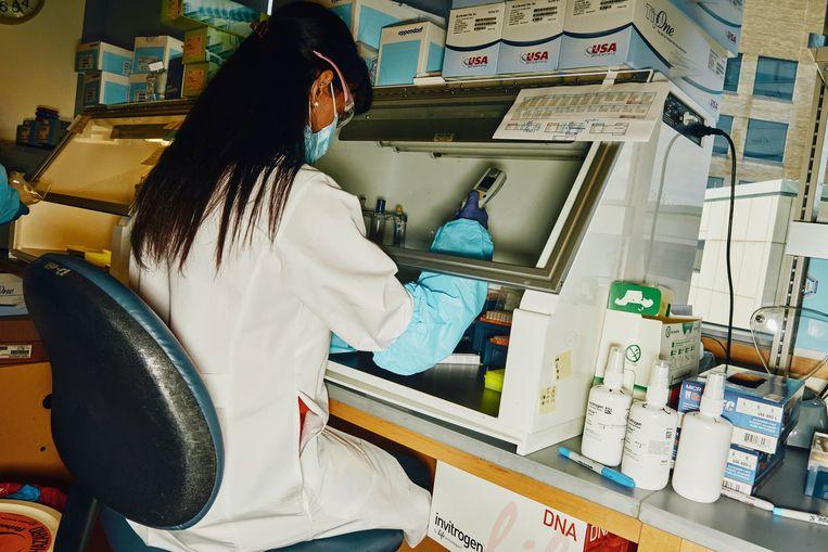 Wetenschappers van het Center for Virology and Vaccine Research in Boston  gingen in de strijd tegen het coronavirus een samen-werking aan met Johnson & Johnson. Beeld NYT