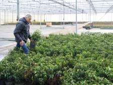 Plantenkweker Jan Mouws (64) voelt welke plant bij klanten hoort