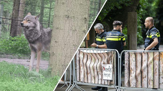 Dierentuin in rep en roer door ontsnapte wolven.
