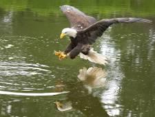 Avifauna kan doorgaan met roofvogeldemonstraties, ondanks incident met baby: 'De vogels doen vrijwillig mee'