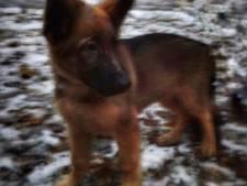 Rusland schenkt Frankrijk politiehond na overlijden Diesel