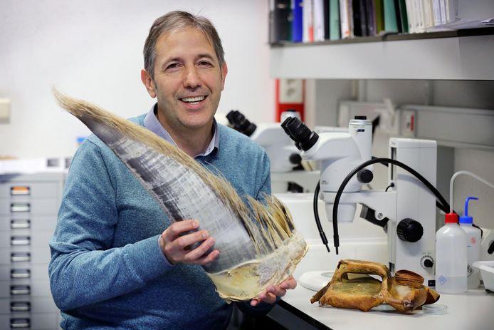 Jan Haelters met een baleinplaat van een walvis en rechts een stuk plastic dat uit de maag komt van een potvis.