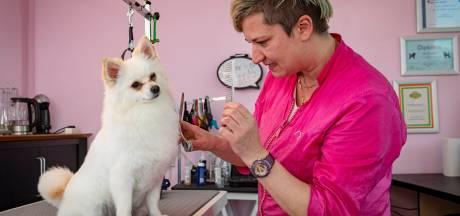 Metamorfose voor keeshondje Susu: 'Honden moeten geknipt, anders leidt dat tot grote gezondheidsproblemen'