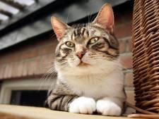 Rotterdammer (32) vrijgesproken van gruwelijke mishandeling van zeven katten