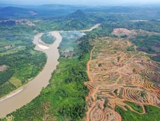 """WWF: """"België bij grootste importeurs producten uit tropische ontbossing"""""""