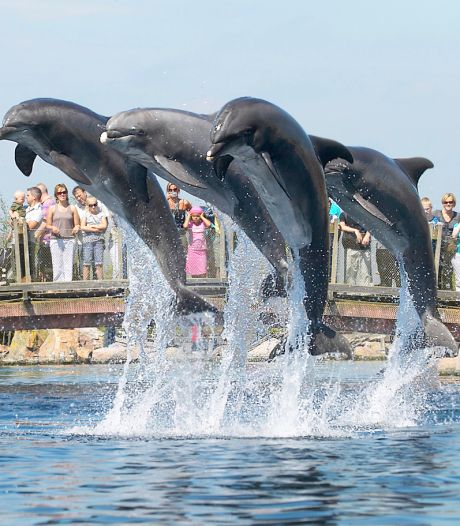 Dolfinarium Harderwijk voor de rechter: dierenclubs willen verhuizing van dolfijnen naar China voorkomen