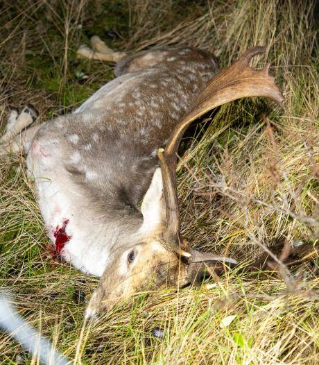 Motorrijder zwaargewond na botsing met hert op de A6 bij Lelystad