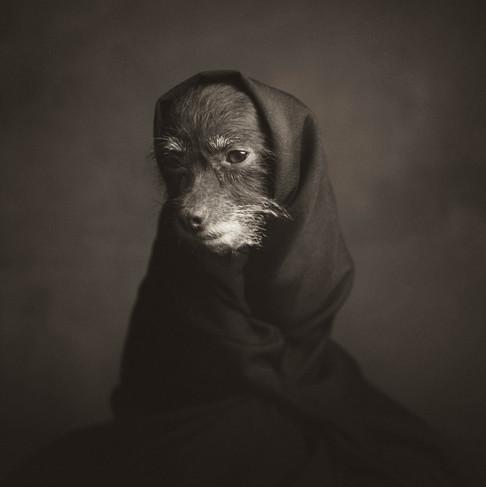 Foto van Deze emotionele en ontroerende dierenfoto's van Antwerpse fotograaf gaan de wereld rond